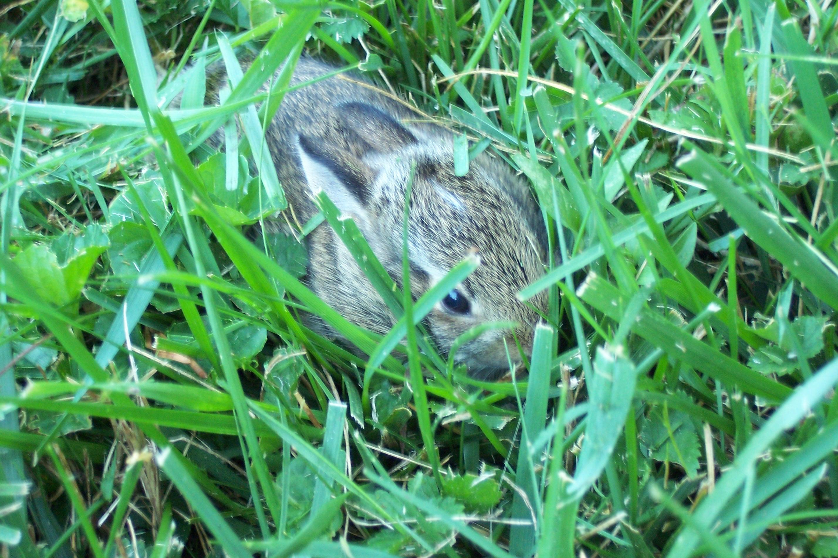 On Yard Work and Baby Bunnies