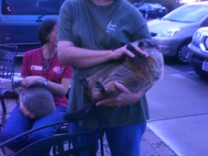 Piedmont Wildlife Rehab volunteers hold groundhogs at their McAlister's Deli charity night
