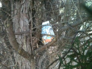 A plastic jug of items in a tree